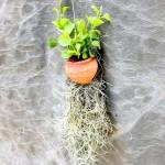 Hanging Ornamental Plant » Foliage